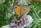 Hoe help je vlinders? Een case study