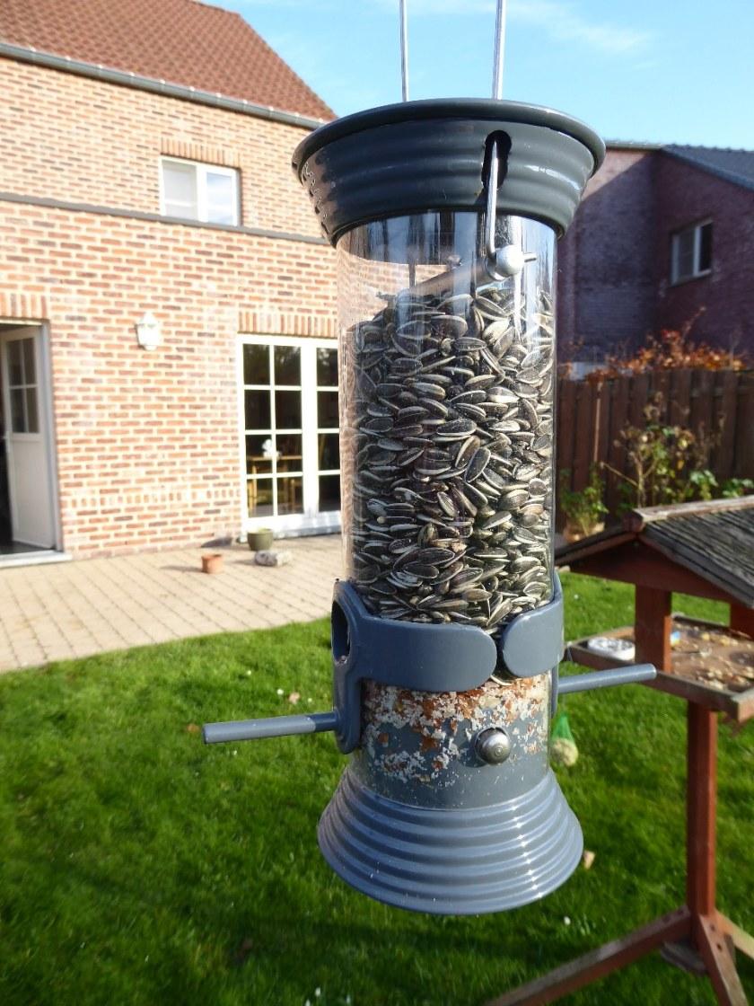 Garden birds (35)_1280x960