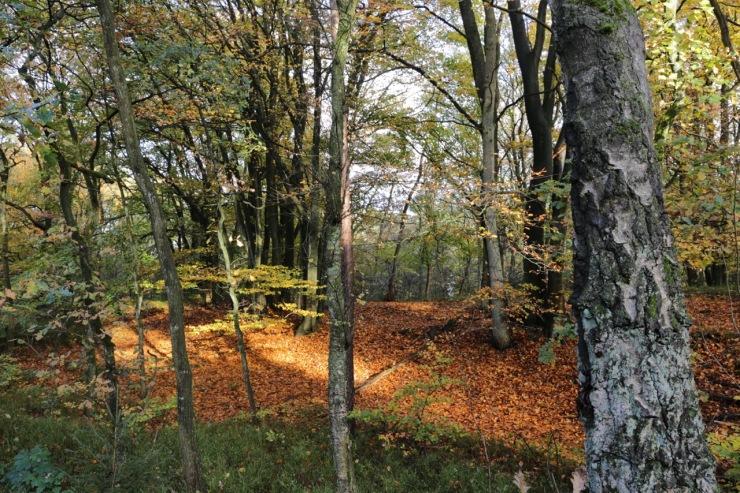 Leaves, 10 November 2017