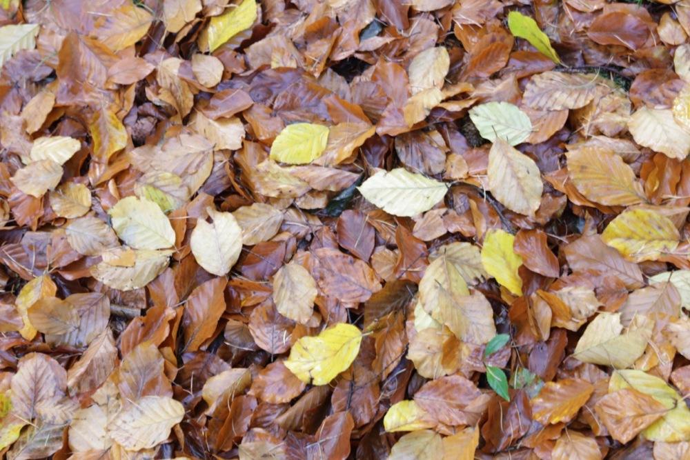 Leaves, on 10 November 2017