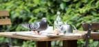 Tips to feed garden birds