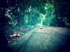 Seasons On A Path
