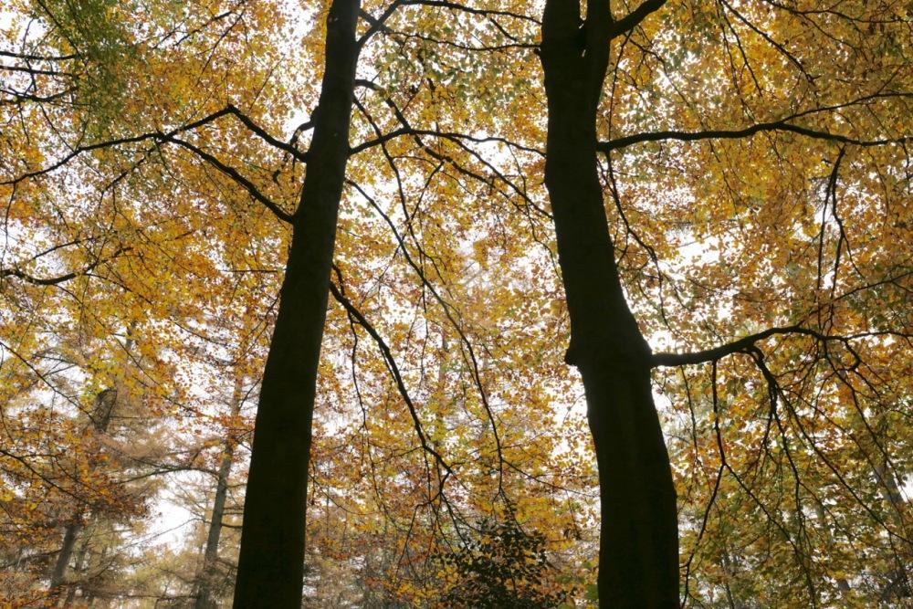 Zandhegge leaves, 10 November 2017