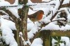 Eerste sneeuw van deze winter | Guido's FotoBlog