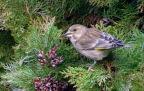 Tuinvogels tellen …Natuurpunt | Welkom op Sandra's FOTOblog