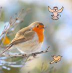 Het Grote Vogelweekend van Natuurpunt |