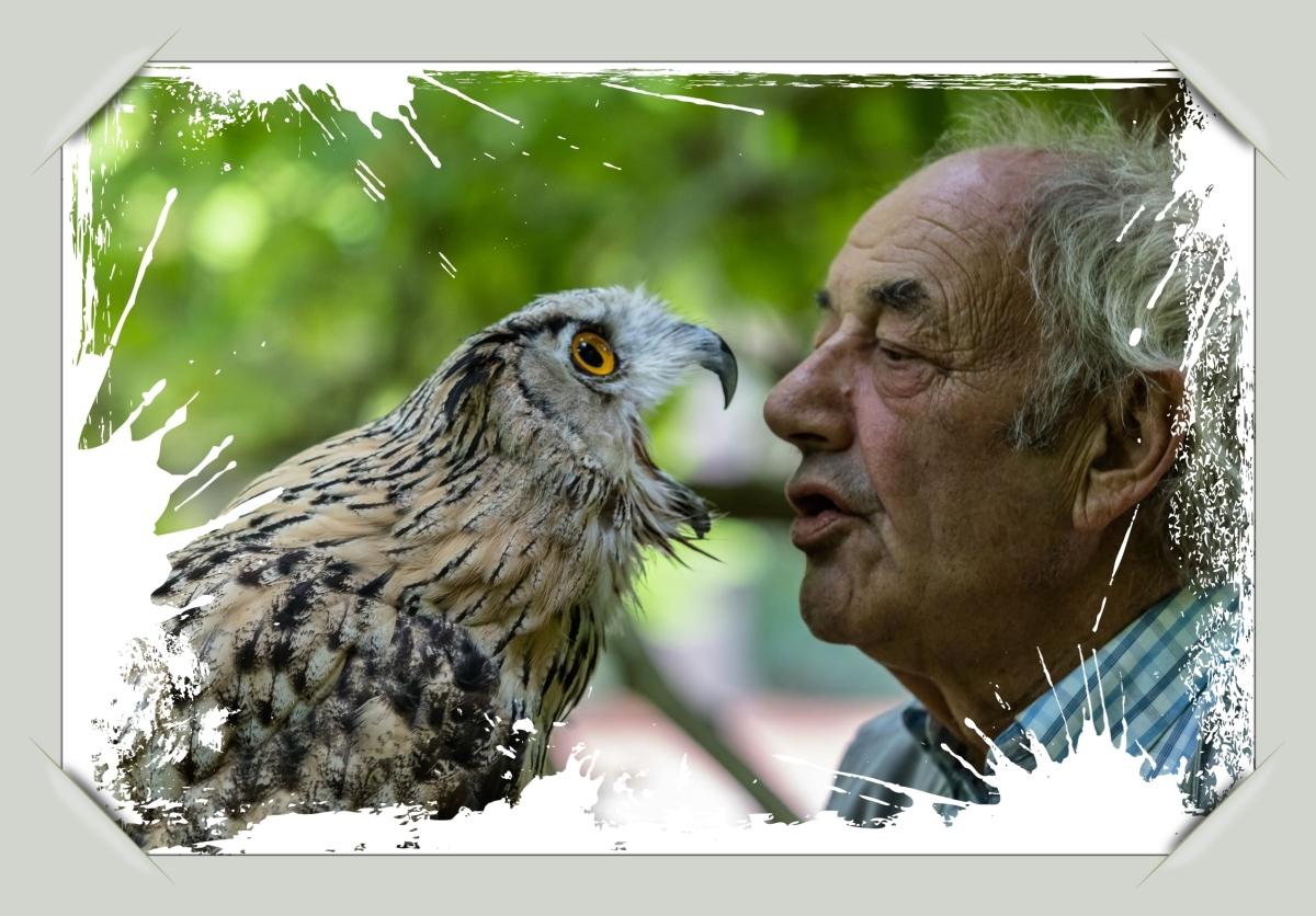 #Theo Herbots #Natuurfotografie | Uilen