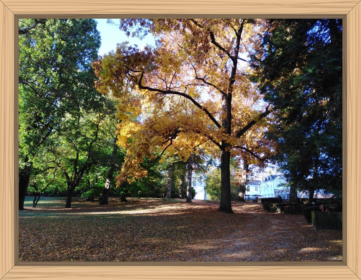Herfst in Tienen | Autumn in Tienen