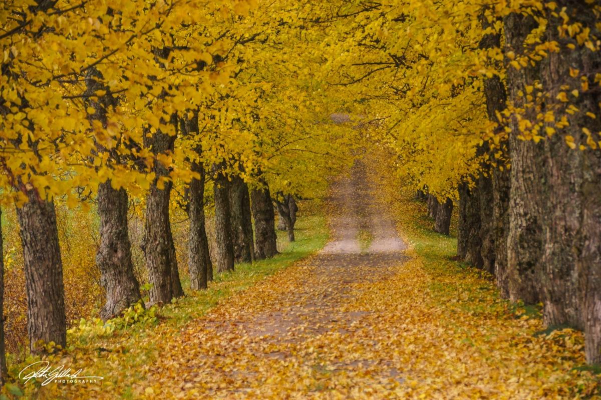 Autumn Vibes~12